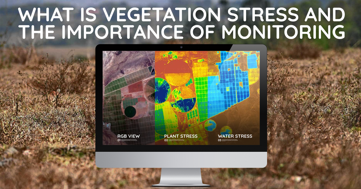 In-Field Stress Forestry Monitoring
