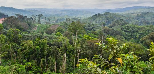 DRC Forest